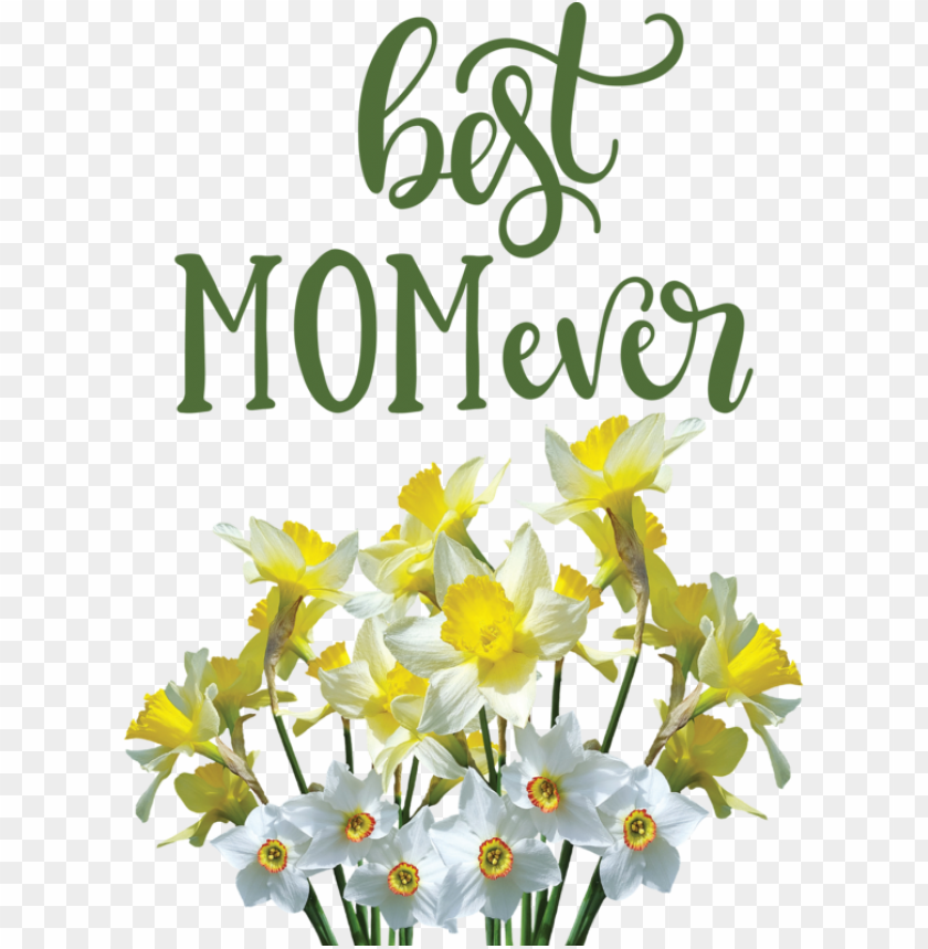 free PNG Mother's Day Wild daffodil Flower Floral design for Happy Mother's Day for Mothers Day PNG image with transparent background PNG images transparent