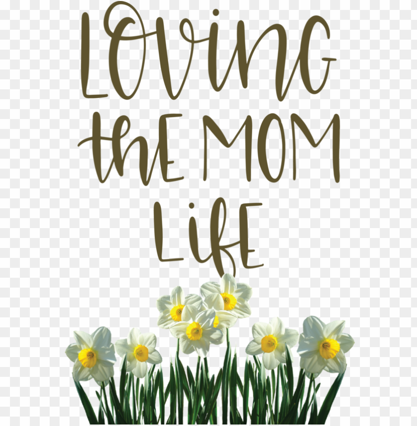 free PNG Mother's Day Wild daffodil Flower Jonquil for Love You Mom for Mothers Day PNG image with transparent background PNG images transparent