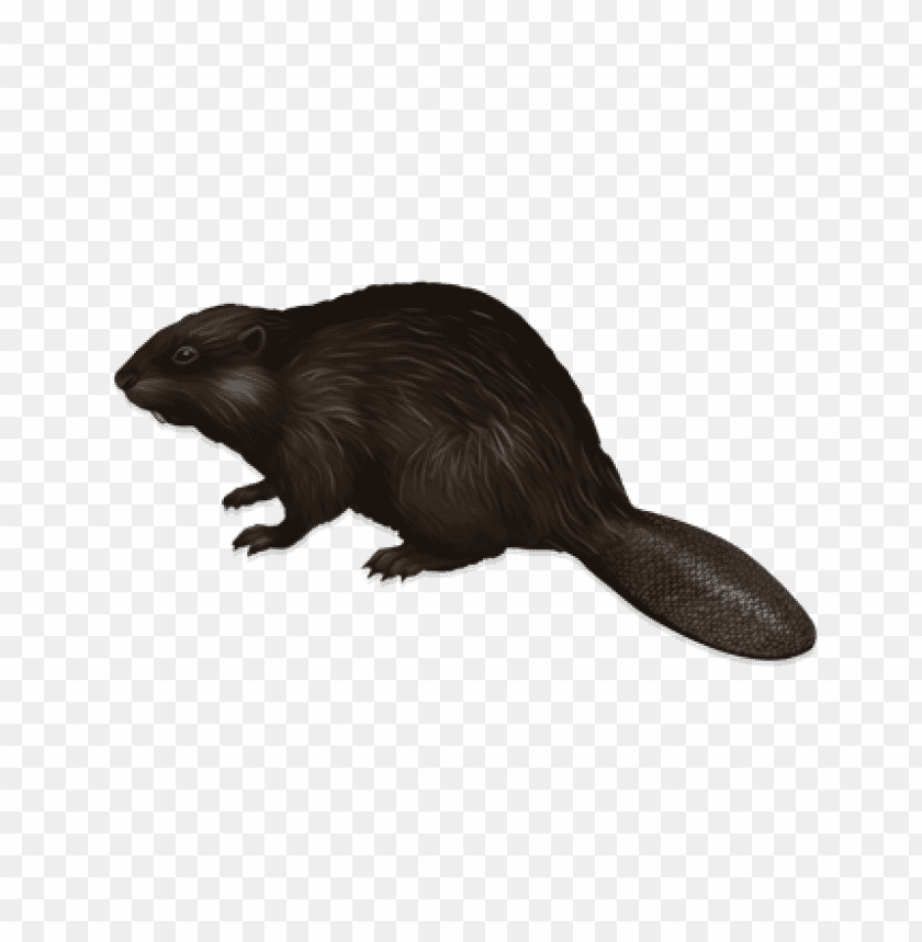 free PNG Download mouse png images background PNG images transparent