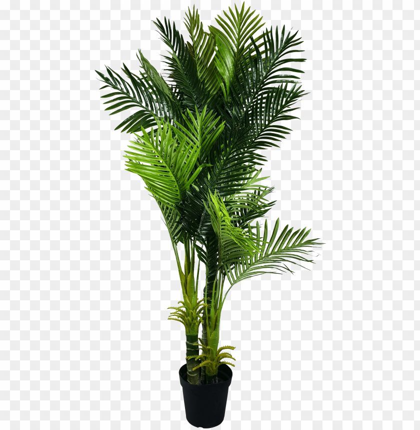 free PNG multi trunk artificial hawaii palm tree - fishtail palm indoor PNG image with transparent background PNG images transparent