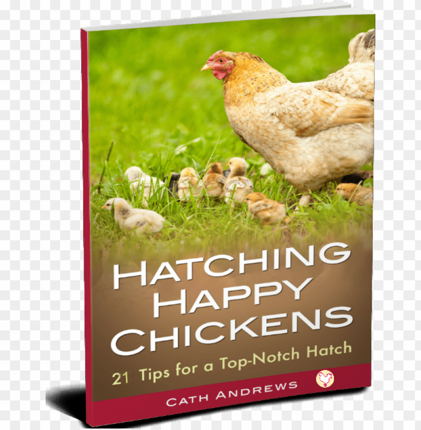 free PNG my kindle book - raising chickens: backyard chickens for beginners: PNG image with transparent background PNG images transparent