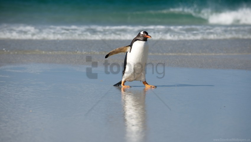 free PNG nature, north, penguin, sea wallpaper background best stock photos PNG images transparent