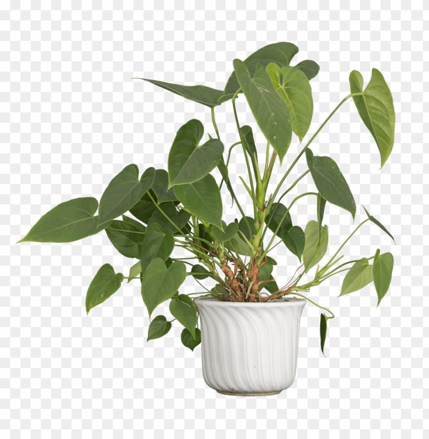 free PNG Download Nature Plants png images background PNG images transparent