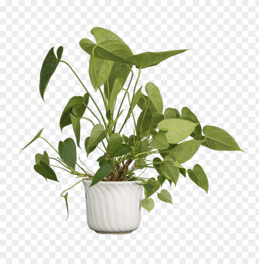 free PNG Download Nature Plants png images background PNG images transparent