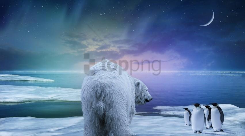 northern lights, penguin, polar bear