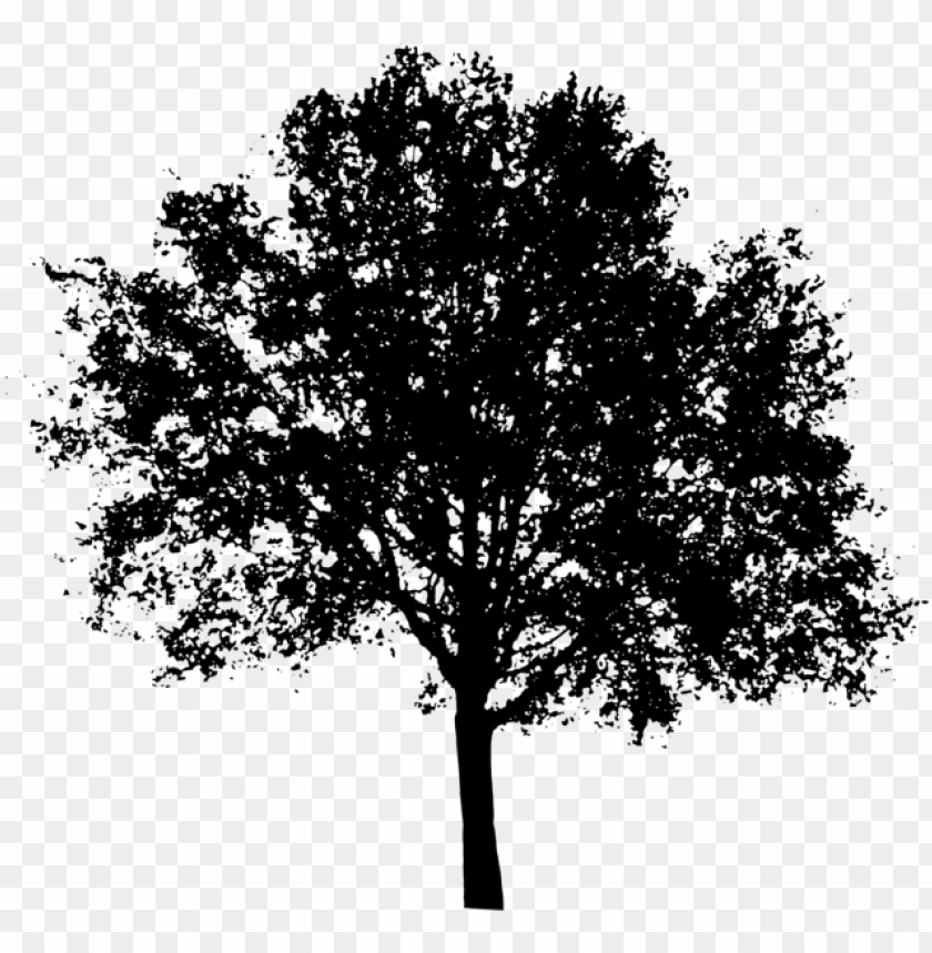 free PNG oak tree silhouette png clipart transparent library - maple tree silhouette PNG image with transparent background PNG images transparent