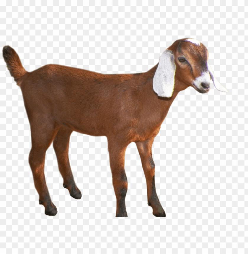 free PNG oats head clipart group goat - clipart transparent background goat PNG image with transparent background PNG images transparent