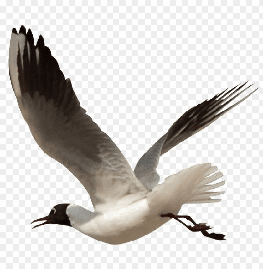 free PNG ocean birds transparent png - beach birds clipart PNG image with transparent background PNG images transparent
