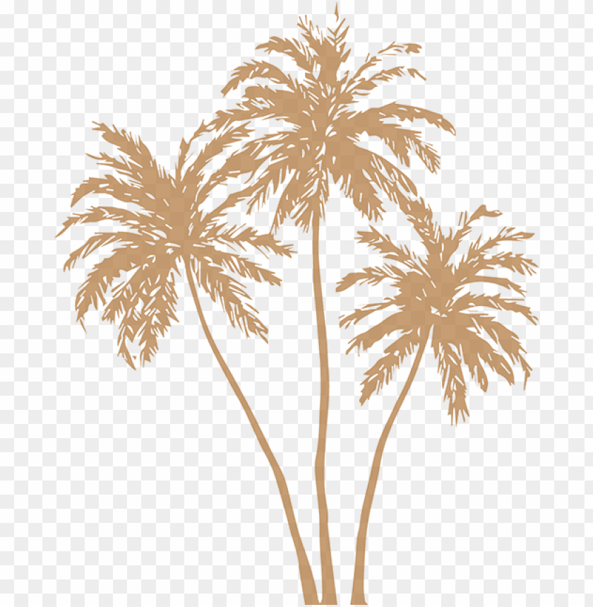 free PNG old palm leaves png image free stock - gold palm tree PNG image with transparent background PNG images transparent