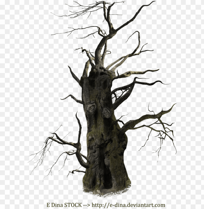 free PNG old tree png free download - old dead tree PNG image with transparent background PNG images transparent