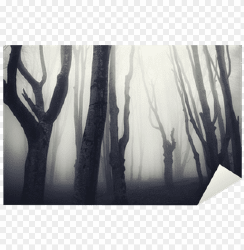 free PNG old twisted trees in a spooky dark forest sticker • - forest PNG image with transparent background PNG images transparent