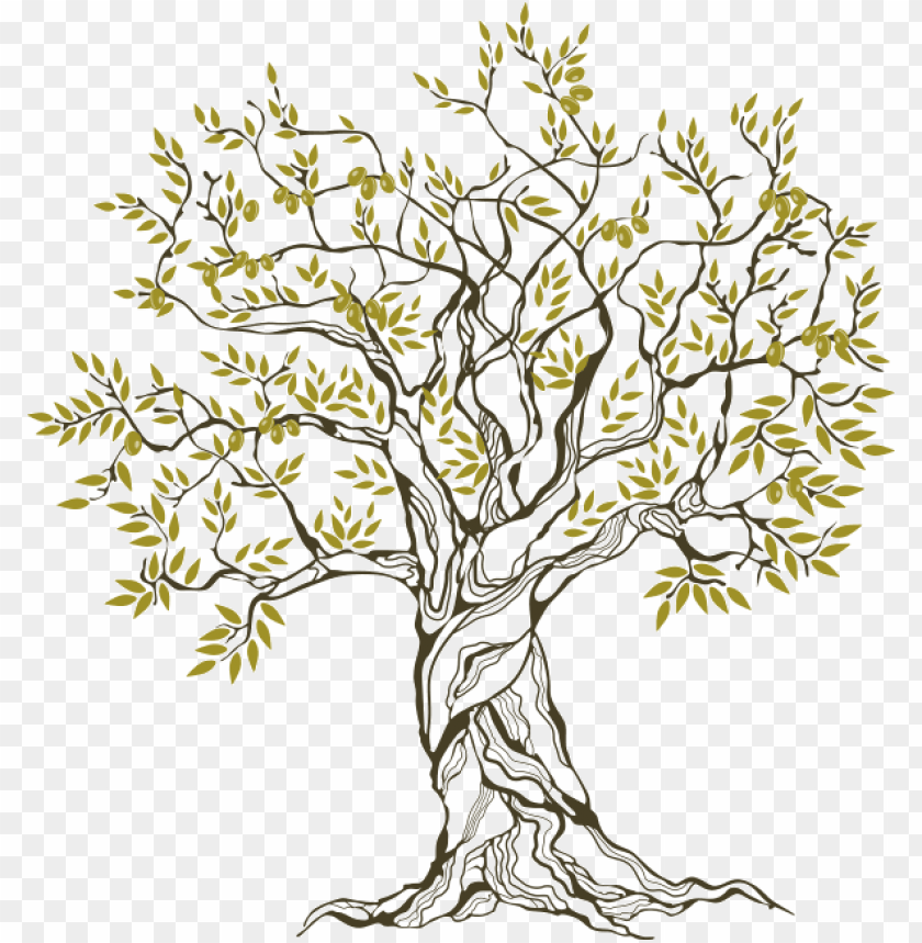 Olive Tree The Blessed One Family Tree Png Image With Transparent Background Toppng