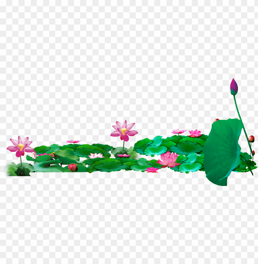 free PNG ond vector lotus - lotus pond PNG image with transparent background PNG images transparent