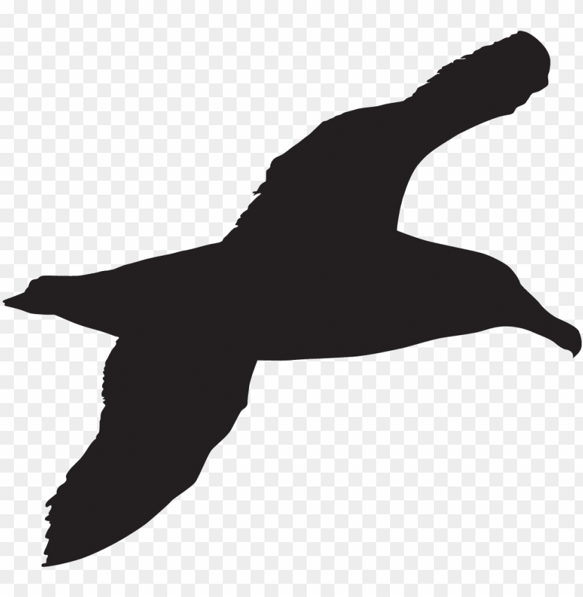 free PNG opular images - sea bird silhouette PNG image with transparent background PNG images transparent