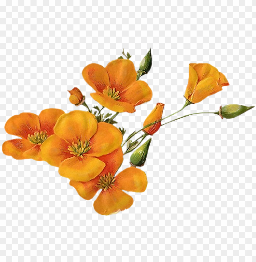 free PNG orange-wildflowers - orange wildflowers PNG image with transparent background PNG images transparent