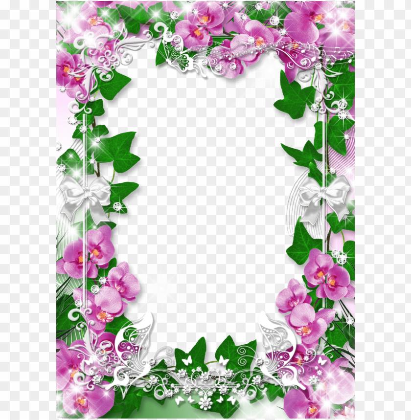free PNG orchid flower frame PNG image with transparent background PNG images transparent