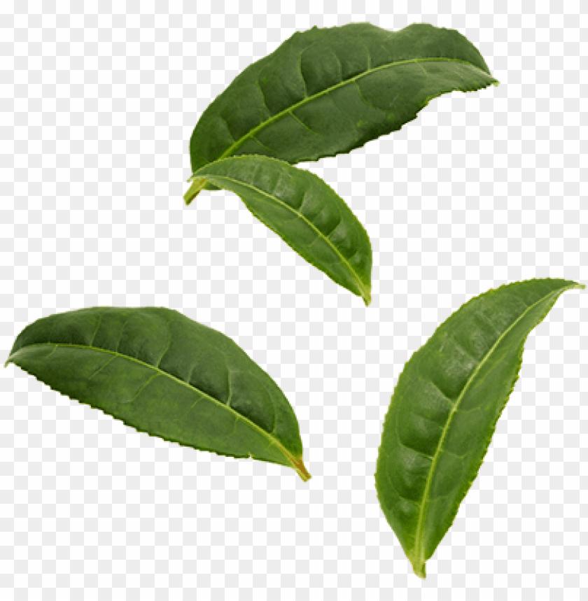 Organic Pu Er Tea Leaves Black Tea Leaf Png Image With Transparent Background Toppng