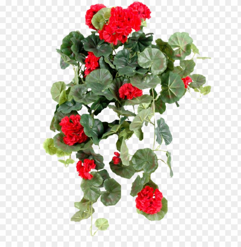 free PNG ornement floral - plante verte retombante fleuries d intérieur PNG image with transparent background PNG images transparent