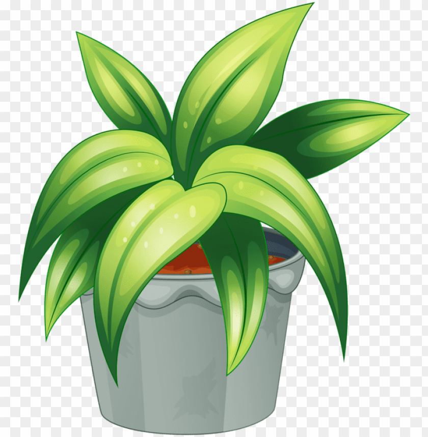 free PNG ot plant clipart botany - flowering plant and non flowering plant PNG image with transparent background PNG images transparent