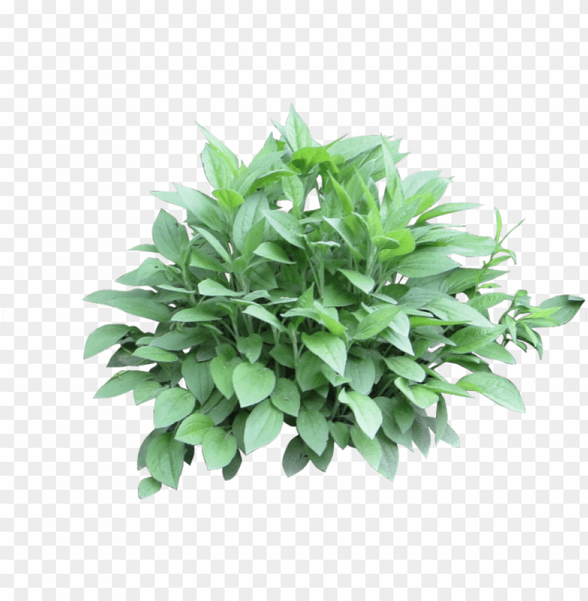 free PNG otted plants clipart shrub plant - shrub photosho PNG image with transparent background PNG images transparent