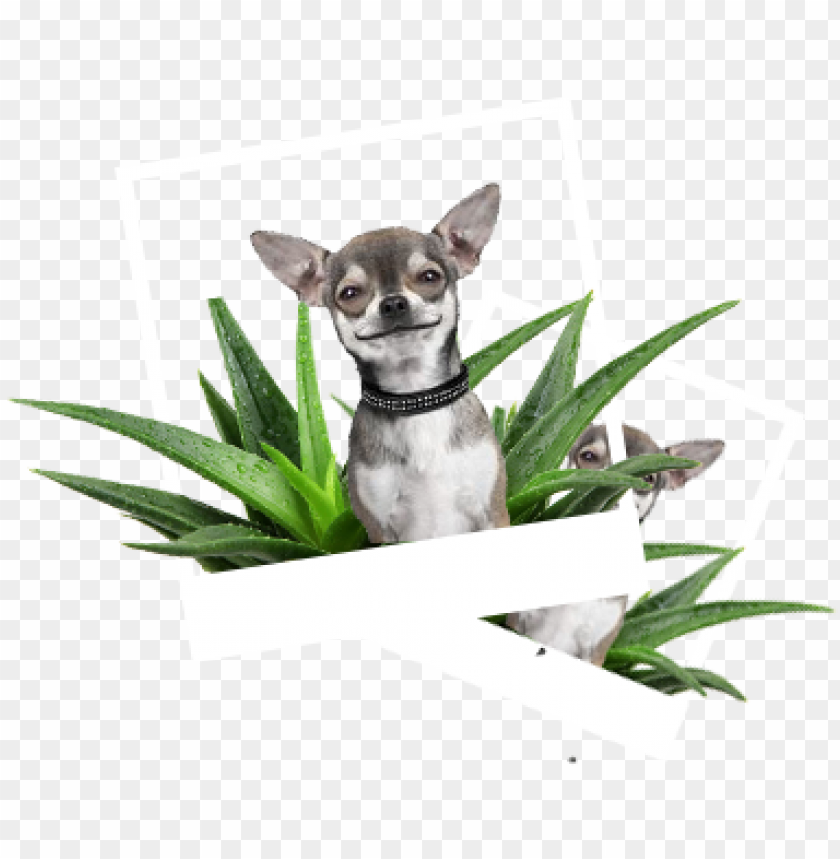 free PNG our product lines - hemingway's chihuahua: collection paper planes PNG image with transparent background PNG images transparent