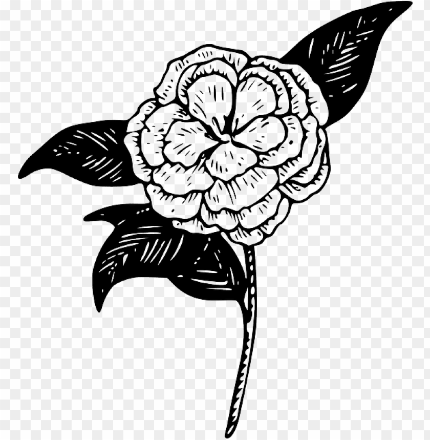 Outline Drawing Flower Plant Draw Garden Tattoo Camellia