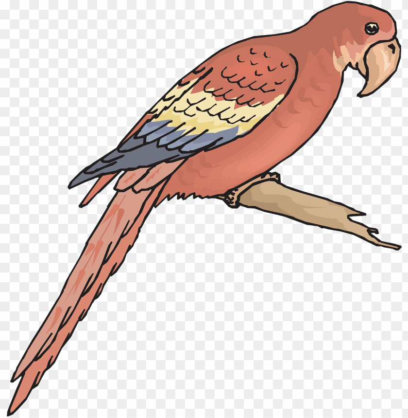 free PNG outline picture of macaw PNG image with transparent background PNG images transparent