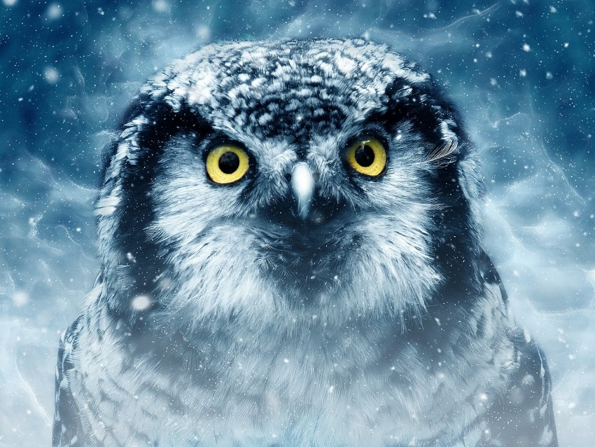 free PNG owl, bird, eyes, looks, closeup, predator, wildlife background PNG images transparent