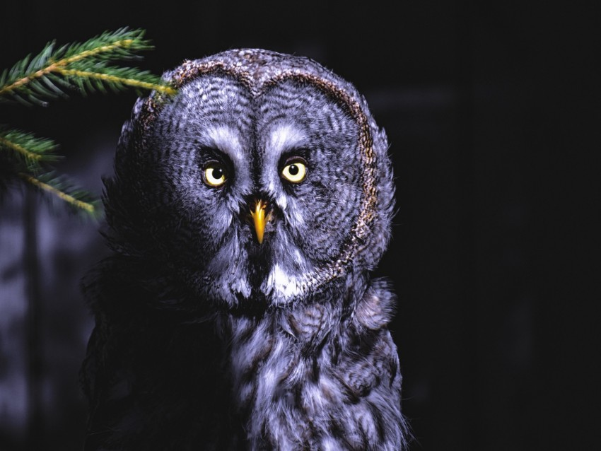 free PNG owl, bird, looks, shadow, predator, feathered background PNG images transparent