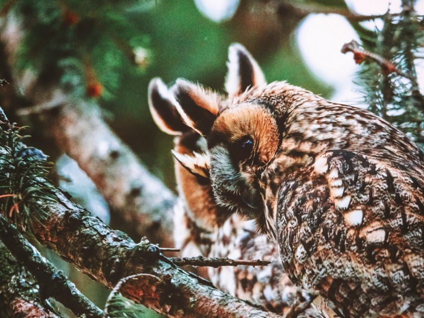 free PNG owl, bird, predator, wildlife, branches background PNG images transparent
