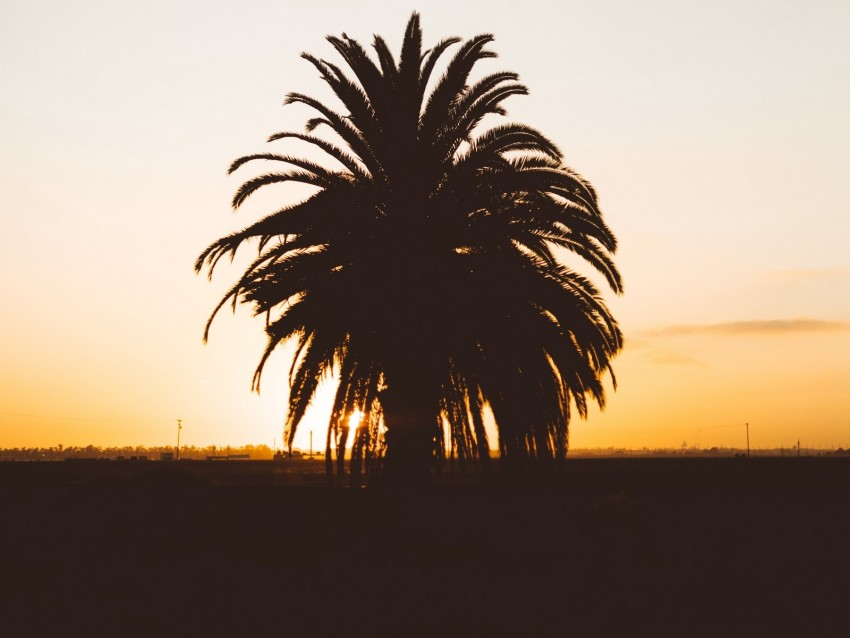 free PNG palm, sunset, shadows, horizon, silhouette background PNG images transparent