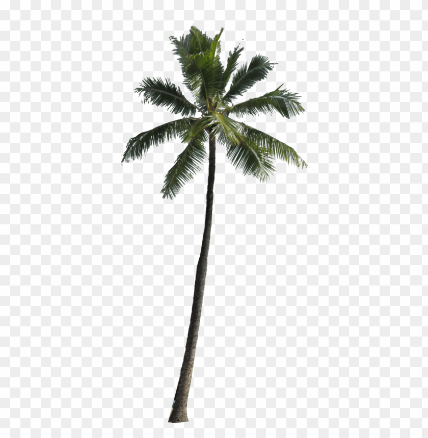Download palm tree png images background@toppng.com