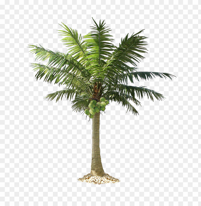 free PNG Download palm tree clipart png photo   PNG images transparent