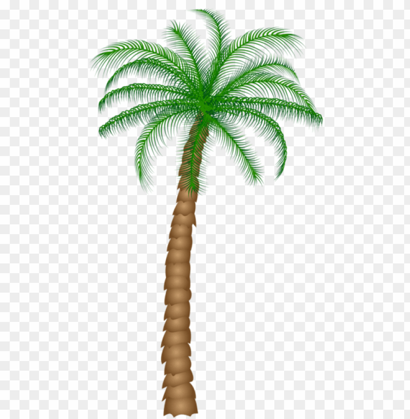 free PNG Download palm tree png images background PNG images transparent