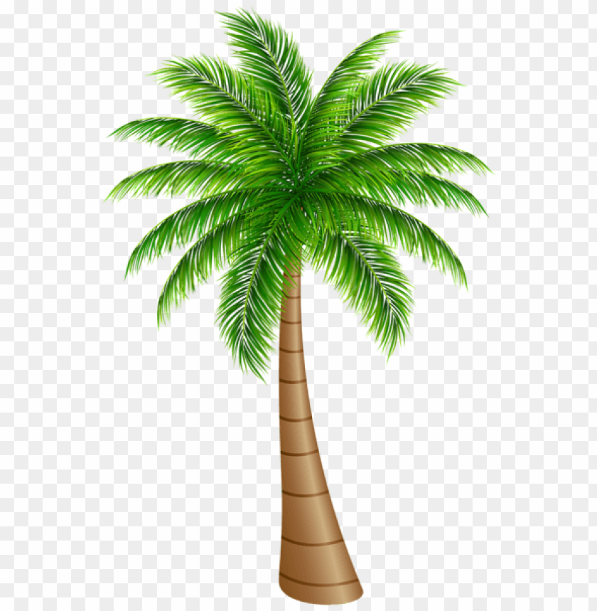 free PNG Download palm tree large png images background PNG images transparent