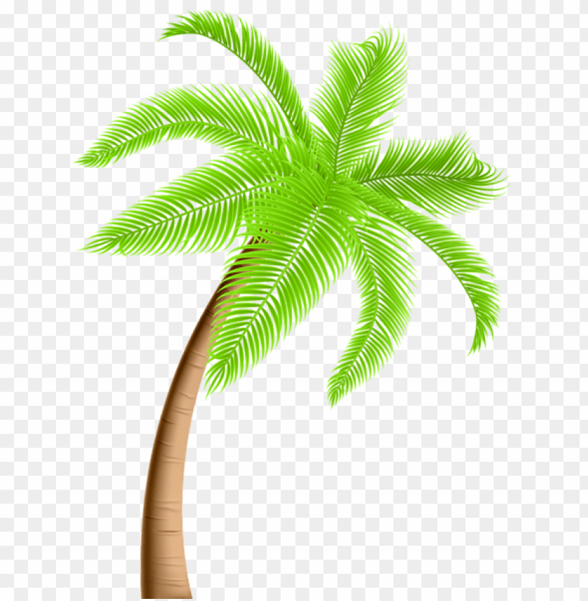 free PNG Download palm tree png png images background PNG images transparent