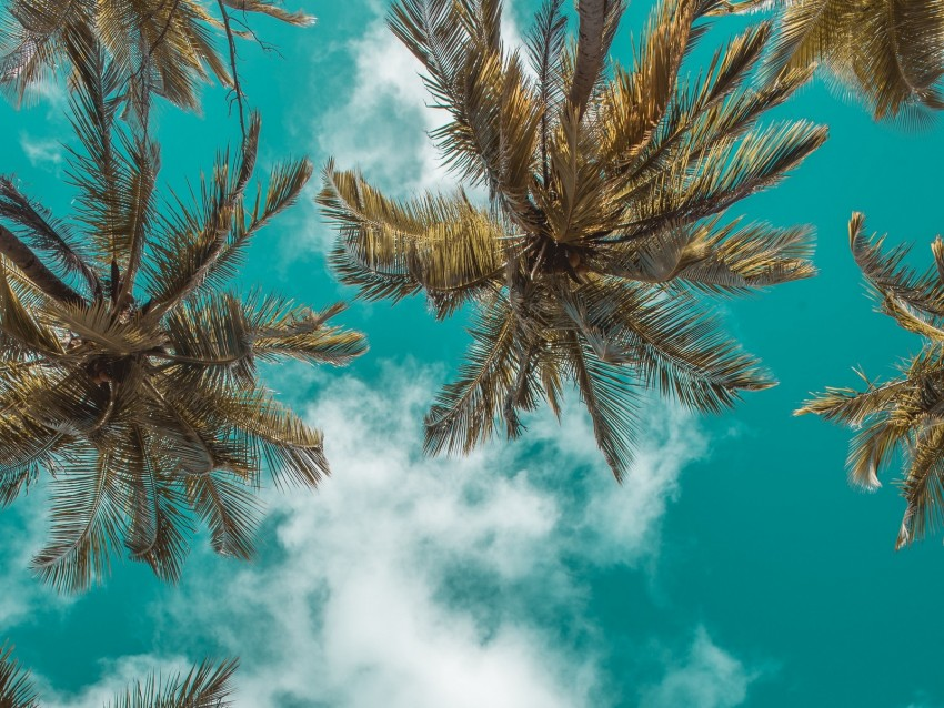 free PNG palm trees, bottom view, clouds, sky, branches, tropics, leaves background PNG images transparent