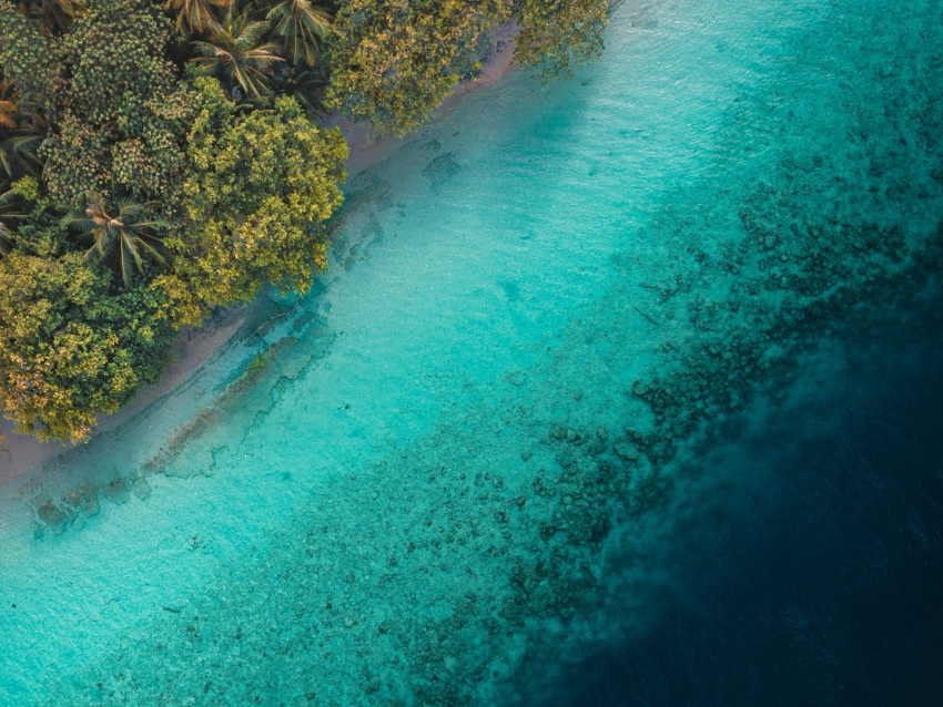 Palm Trees Ocean Aerial View Tropics Water Background Toppng