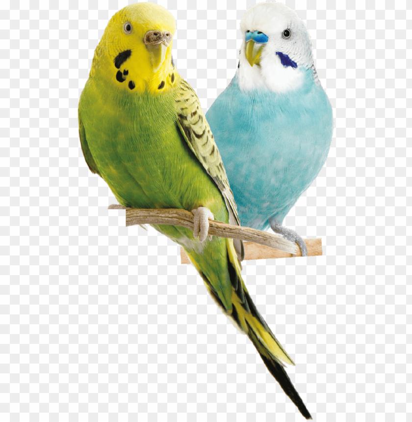 free PNG Download Parrot png images background PNG images transparent