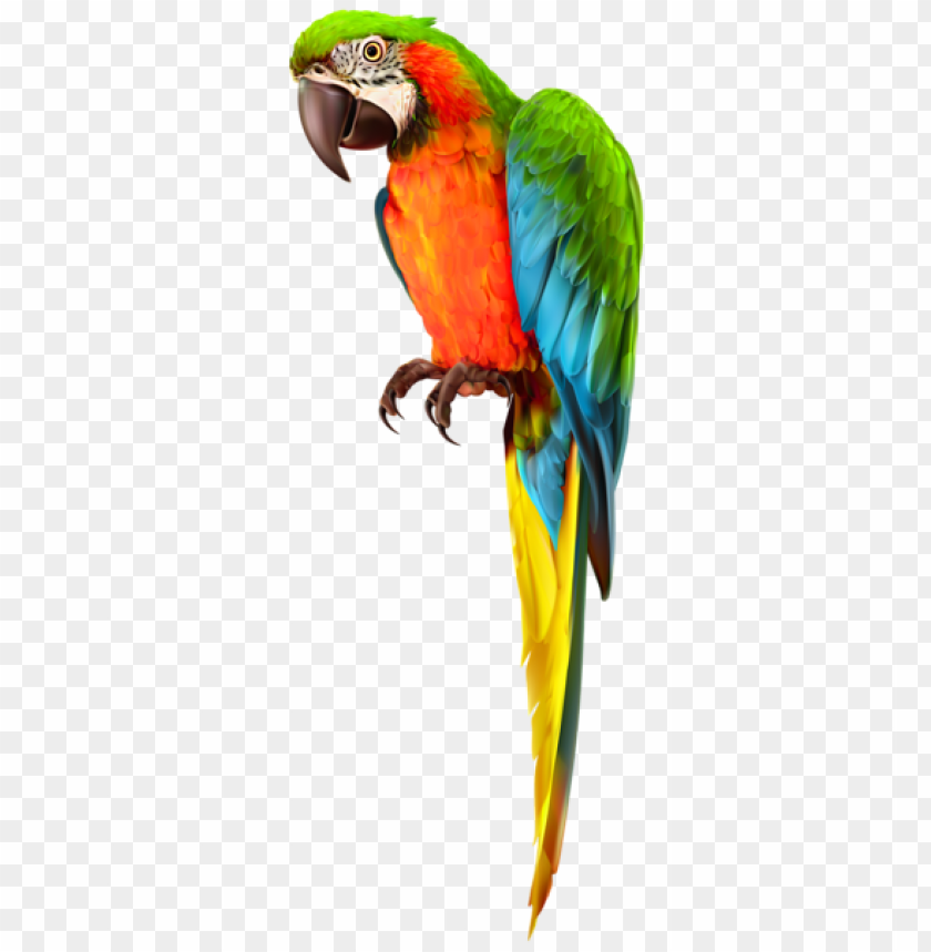 Download parrot transparent png images background@toppng.com