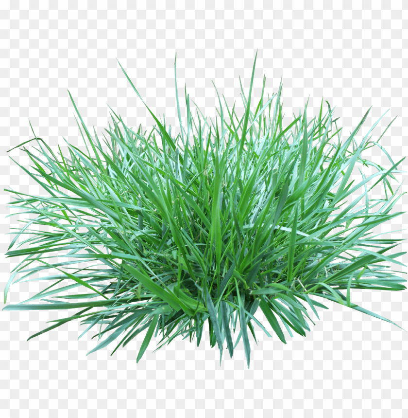 free PNG Download patch of grass png images background PNG images transparent
