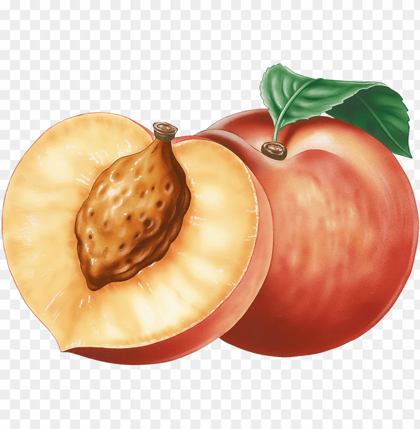 Download peach clipart png photo | TOPpng