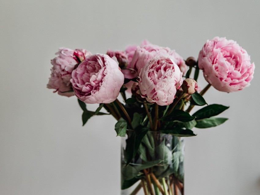 free PNG peonies, flowers, bouquet, pink, vase background PNG images transparent