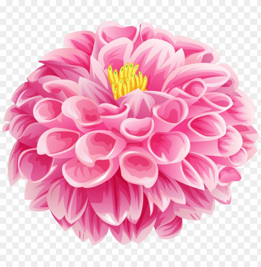 free PNG Download pink dahlia flower png images background PNG images transparent
