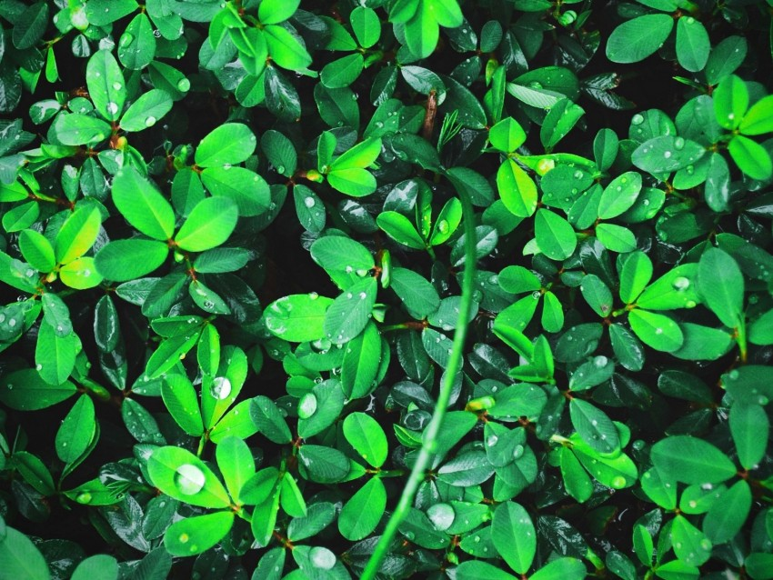 free PNG plant, leaves, green, bright, drops, dew background PNG images transparent