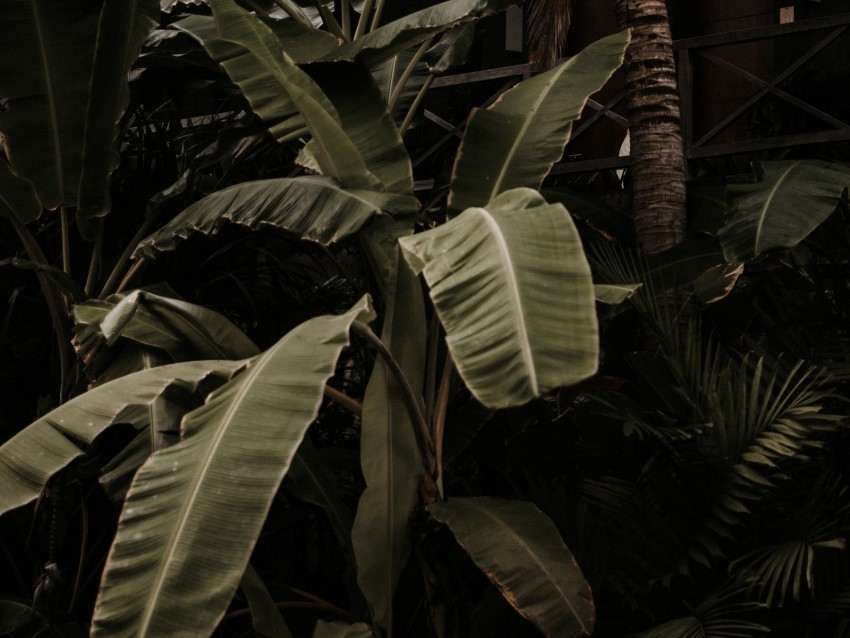 free PNG plant, tropical, exotic, leaves, green background PNG images transparent