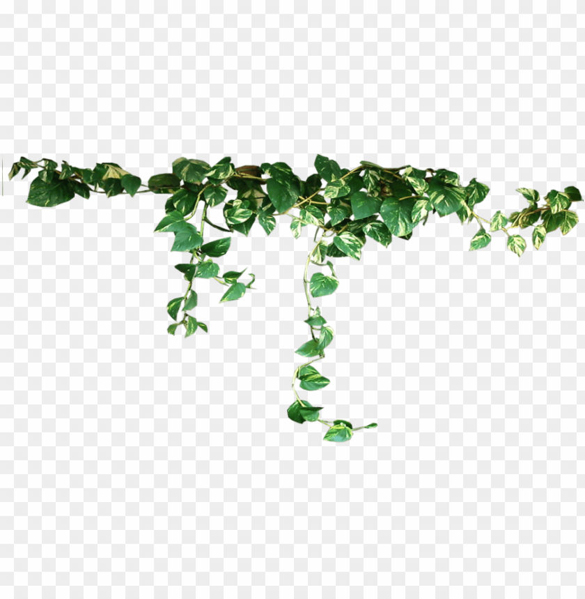 free PNG Download plants png images background PNG images transparent