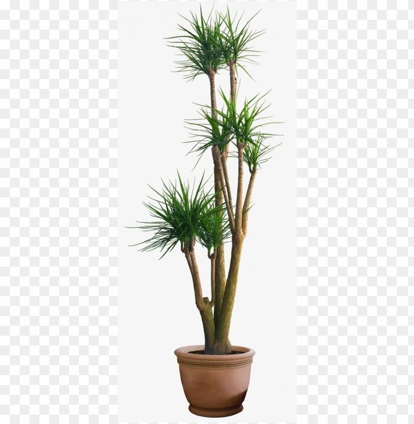 free PNG Download plants png images background PNG images transparent