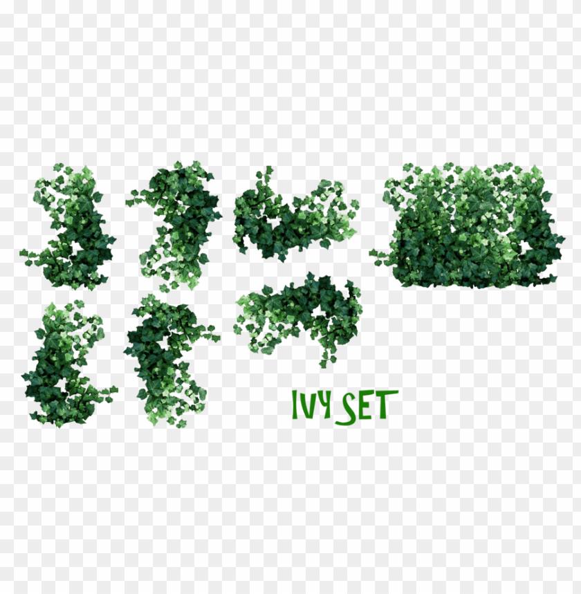 free PNG Download plants download png png images background PNG images transparent