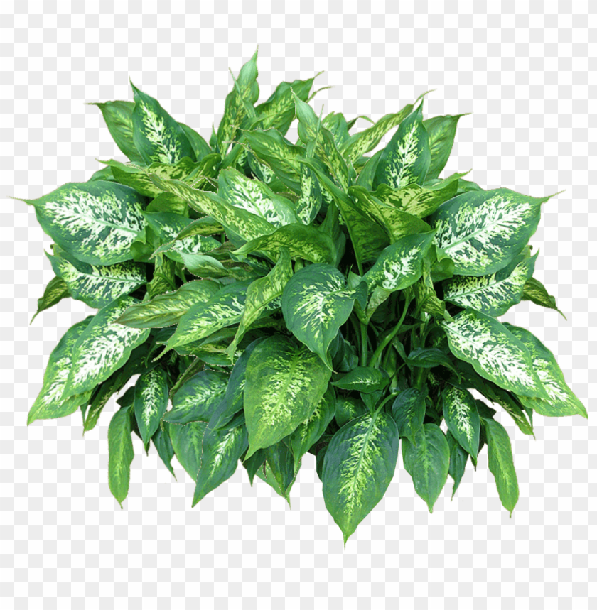 free PNG Download plants free download png png images background PNG images transparent